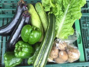 2016野菜BOXS4
